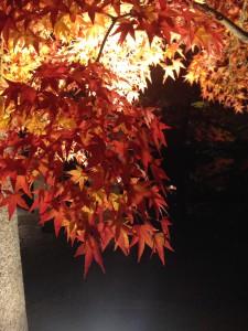 紅葉写真1