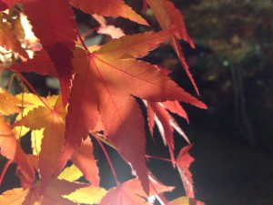 紅葉写真2