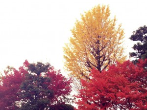 紅葉写真5