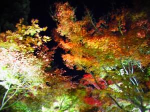 紅葉写真7
