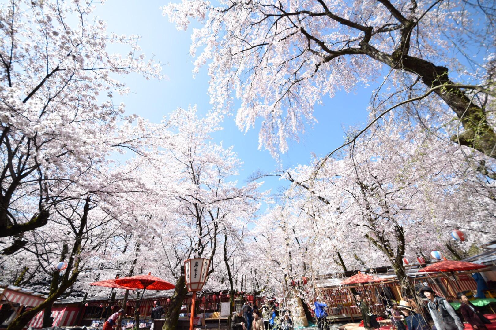 京都でお花見してきました!